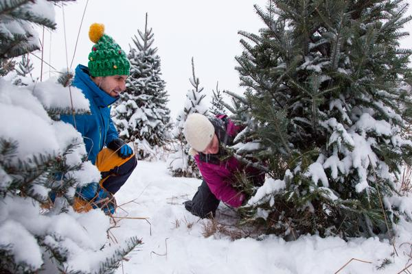 cut your own christmas tree - Cut Your Own Christmas Tree